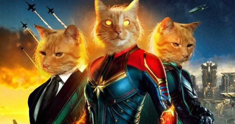 Captain Marvel Goose The Cat Live Stream